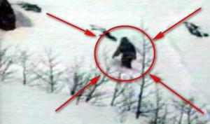 Разкрита е мистерията около Снежния човек Йети