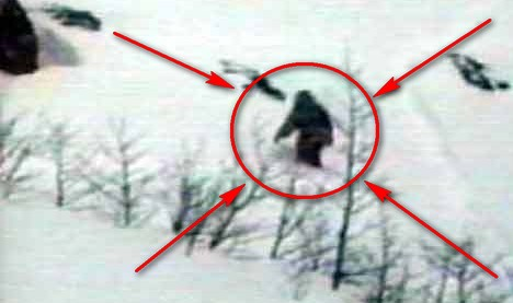 Разкриха мистерията на Снежния човек, наречен Йети!