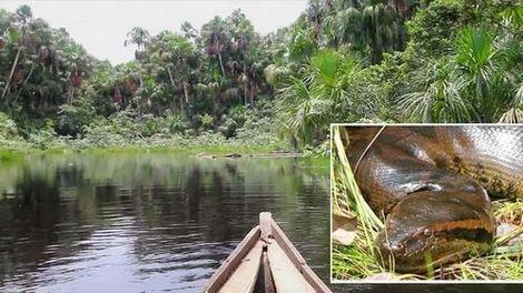 Убиха огромна анаконда в Амазония