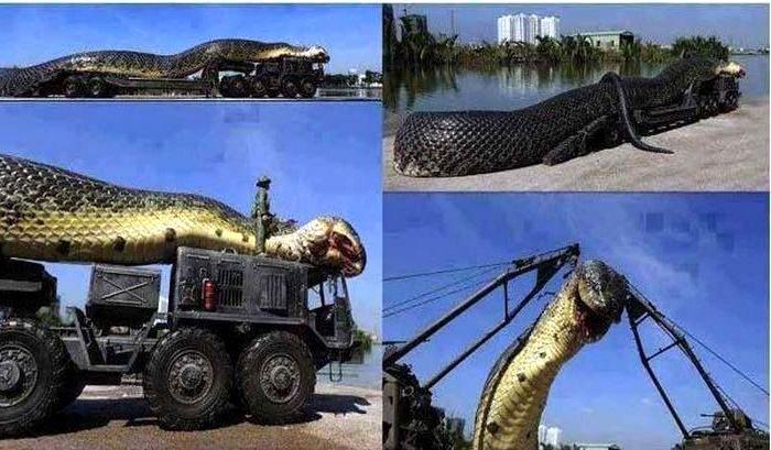 Най-голямата змия – за пръв път светът вижда такова чудовище?