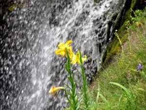 Див крем край Орфеевия водопад