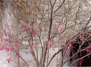 Дърво с мартеници