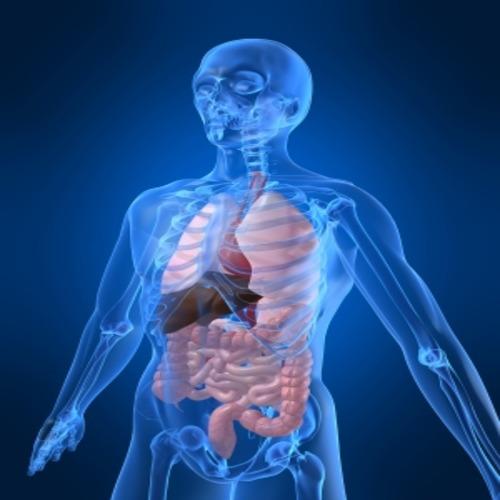 Загадките на човешкото тяло