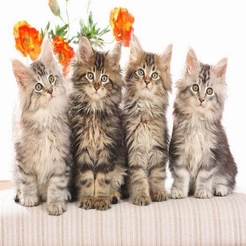 Котките крият тайната на дълголетието!