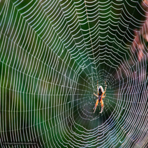 зодия паяк