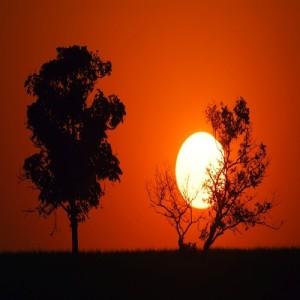 слънцеяди Слънце