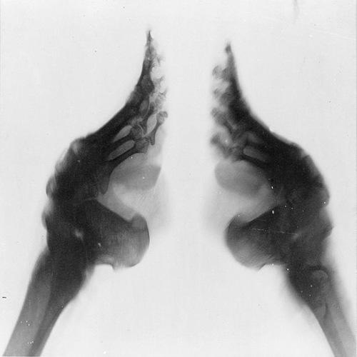 Шокиращата тайна на лотосовите стъпала