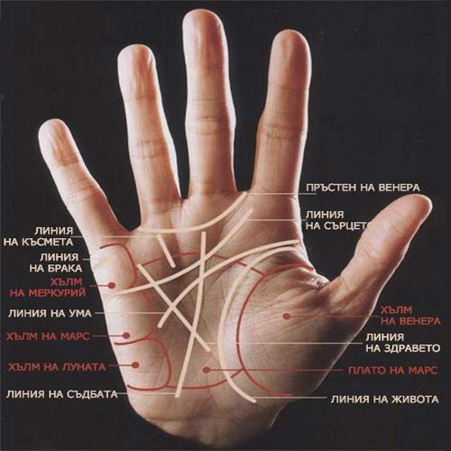Да разгадаем посланието за съдбата ни чрез линиите на ръката