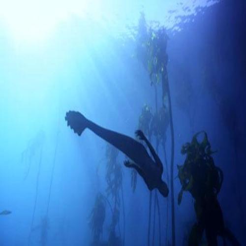 Рибари случайно откриха истинска русалка?