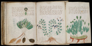 Световни загадки - ръкописът на Войнич