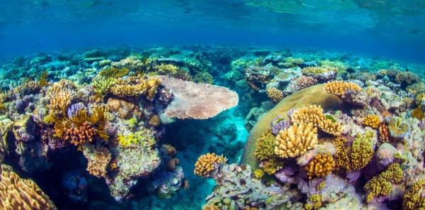 Най-голямата система от корали в света позната като Големия бариерен риф