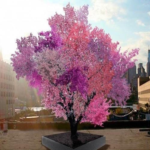 На какво е способно най-уникалното дърво в света?