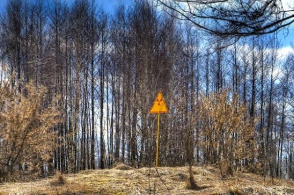 Близо 30 години след трагедията в Чернобил все още се изследват последиците от радиацията