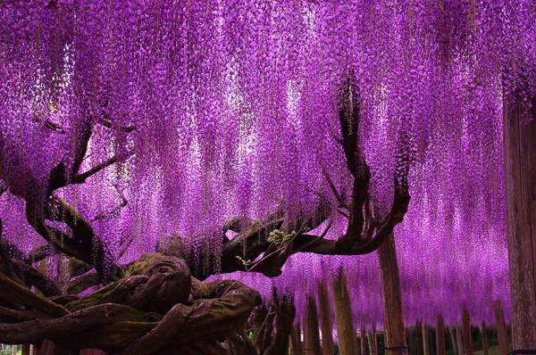 най-забележителните дървета