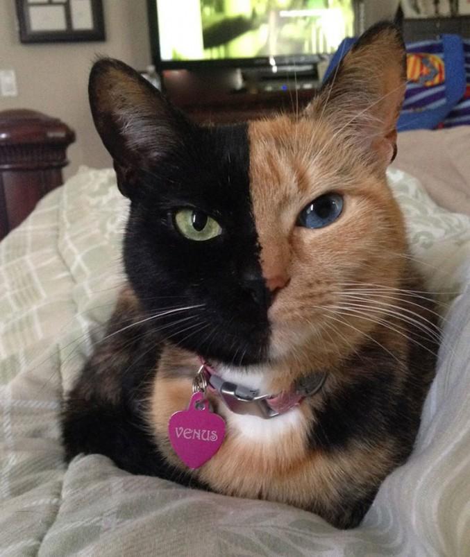 Котката Венера се оказа с необикновени способности
