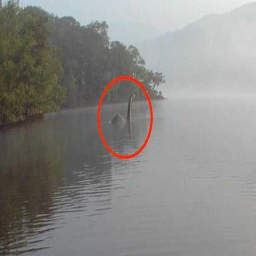 Туристка засне непознато същество в малко езеро
