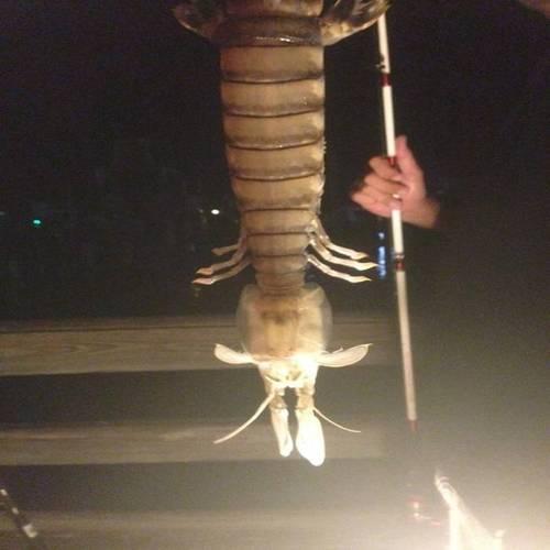 Рибар улови невиждано същество