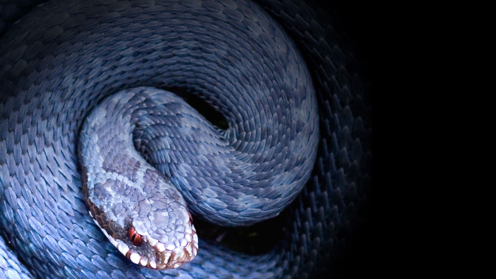 Змията – символ на мъдростта, живота и смъртта