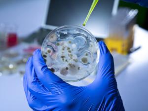 Конспиративни теории за вируса ебола