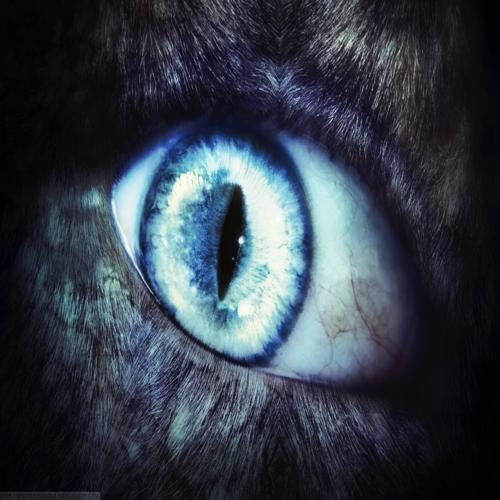 Съществуват ли върколаци, познати на човечеството от дълбока древност?