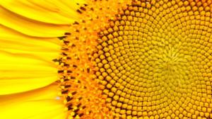 Числата на Фибоначи интригуват математици, художници и дизайнери и учени в продължение на векове