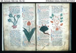 Ръкописът на Войнич и досега не е разгадан