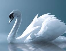 Зодия Лебед – 2 IX – 29 IX