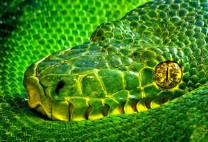 Зодия Змия 15 IV -12 V