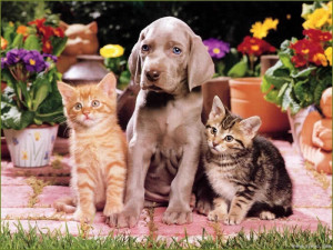 Домашните любимци са лечители (Вижте как лекуват кучета и котки)