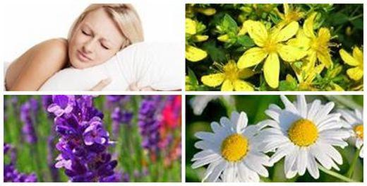 Билки за сън – спокойствие от природната аптека