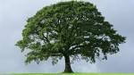 Ако при гледане на кафе видите дърво