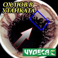 гледане на кафе охлюф