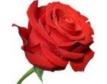 символ роза при гледане на кафе