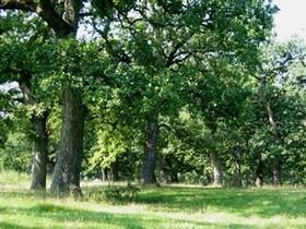 трюфели дъбова гора
