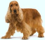 трюфели обучение на кучета