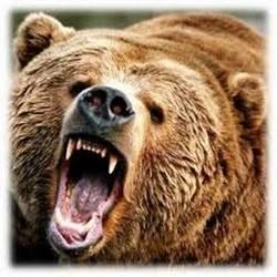 При гледането на кафе мечката е символ на предателство