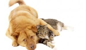 И котка, гони котка, разкъсва котка, съновник