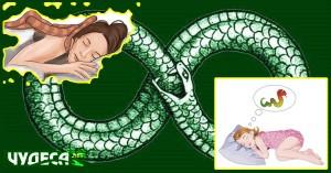 съновник змия, какво значи да сънуваш змии