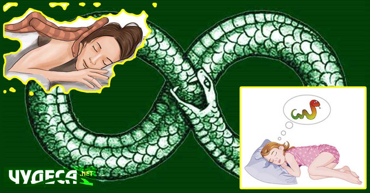 Съновник змия – какво означава да сънуваш змии?