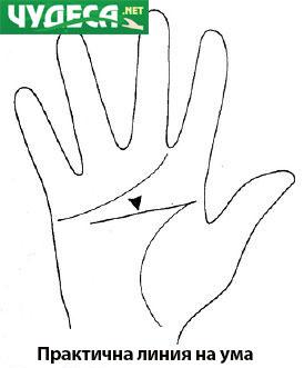 хиромантия гледане на ръка 16