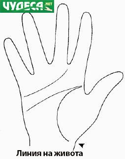 хиромантия гледане на ръка 14