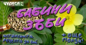 бабини зъби tribulus terrestris рецепта чай