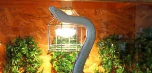 красимир христов черна кафява змия България - 05
