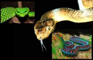 съновник змия да сънуваш змии значение - 03