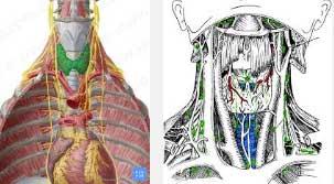 импулсна терапия и зелени орехчета за щитовидна жлеза - 01