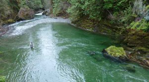 златоносни реки в Родопите, иманяри злато - 05