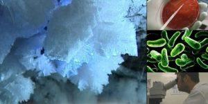 Учен се инжектира с непознати вечно замръзнали бактерии.