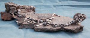 Останките от овирапотозавър, открити от земеделски производител и строителни работници в Китай.