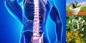 Природни средства и методи за болки в гърба