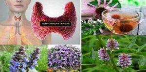 Някои билки са полезни за естествено подобряване здравето на щитовидната жлеза и могат да се ползват при нейното лечение и възстановяване
